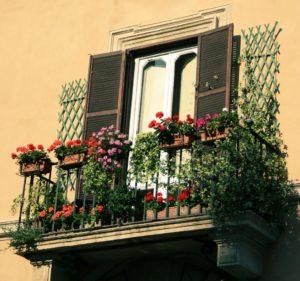 Цветущий сад на балконе — готовьтесь! 3 волшебных растения
