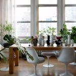 6 комнатных растений за которыми не надо ухаживать