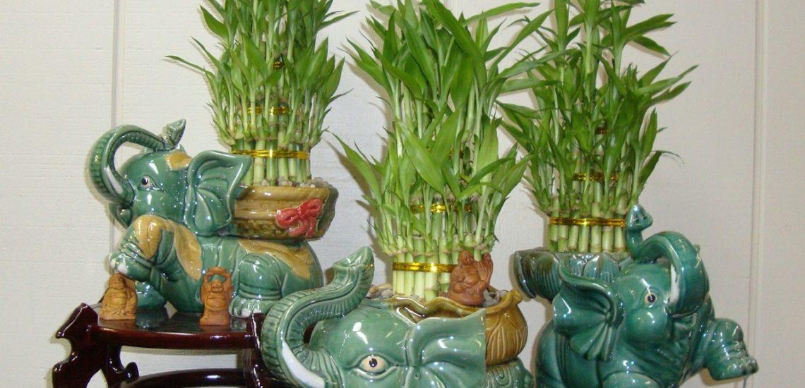 бамбук в кашпо-слоники