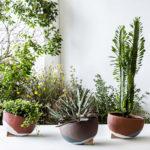 Диалог с зеленым декором