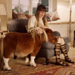 Маленькие лошадки, которые любит спать на кресле