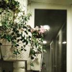 Как из мужа, ненавидящего цветы, сделать флориста!