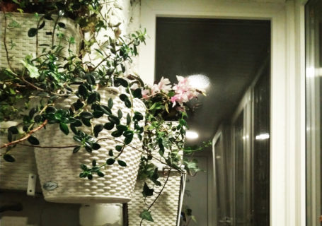 вертикальное озеленение в квартире