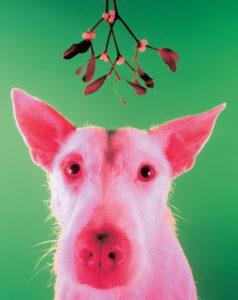 забавные собачки, символ года