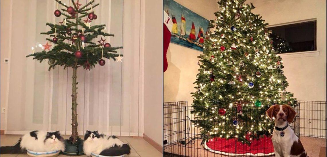 елка и домашние питомцы