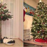 Самые необычные способы спасти новогоднюю елку от домашних животных
