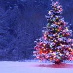 Как елка может испортить Новый год?