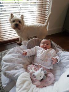домик для собаки своими руками