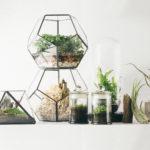 Флорариум своими руками: более 20 идей
