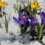 Как приблизить весну? 5 шагов к теплому солнцу