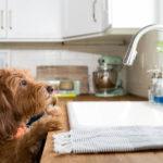 Как изменить кухню за один день?