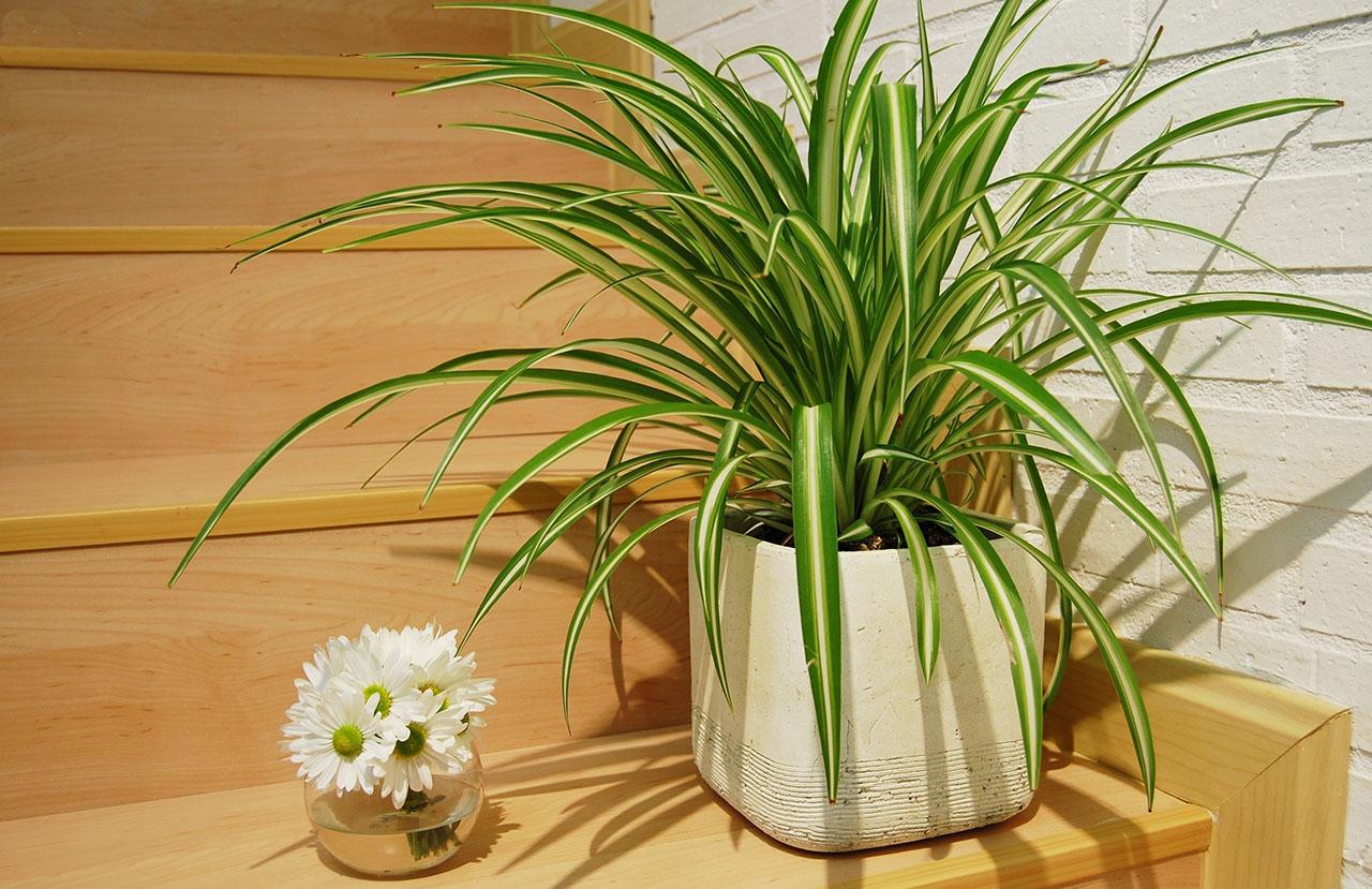 полезные цветы для квартиры с фото будет носить высокие