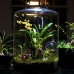 Создаем террариум с живыми растениями