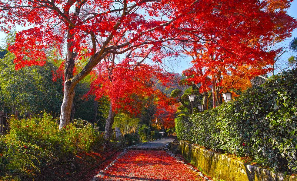 Краски японского сада