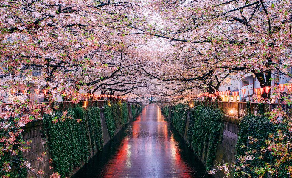 Деревья и цветы в японском саду