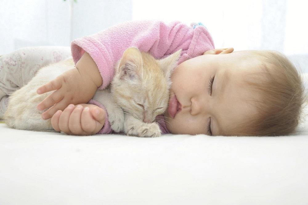 Разрешать ли кошке спать с маленьким ребенком