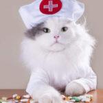 Кошки могут защитить своих хозяев от коронавируса