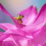 Сад под лупой: потрясающие макро-фотографии, которые заставят вас по-другому взглянуть на растения