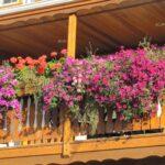 Как превратить унылый балкон в цветущий сад