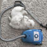 Как выбрать пылесос для квартиры с домашними животными?