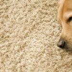 Теперь мои ковры как новые. Легкий способ, который без усилий удалит все загрязнения любой сложности