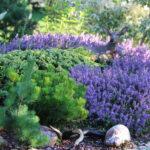 Растения-обереги: что обязательно нужно посадить в саду