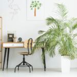 Джунгли в вашей квартире. 10 пальм, которые не требуют особого ухода и выглядят восхитительно