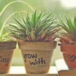 Мой простой, но удобный способ посадки комнатных растений. Всего 3 действия и цветам уютно, а мне легко за ними ухаживать