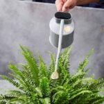 Как понять, что растению не хватает воды? Топ 4 признака