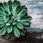 Комнатные растения с приятным ароматом, которые можно использовать вместо освежителя
