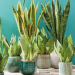 5 растений для свежести и чистоты дома