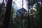 Русский дизайн дома на ветвях деревьев