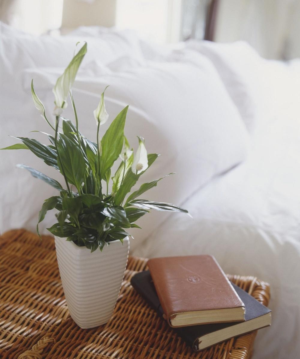 Цветы челябинске, популярные цветы в доме для счастья