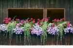 16 простых идей для создания эффектных композиций из домашних цветов