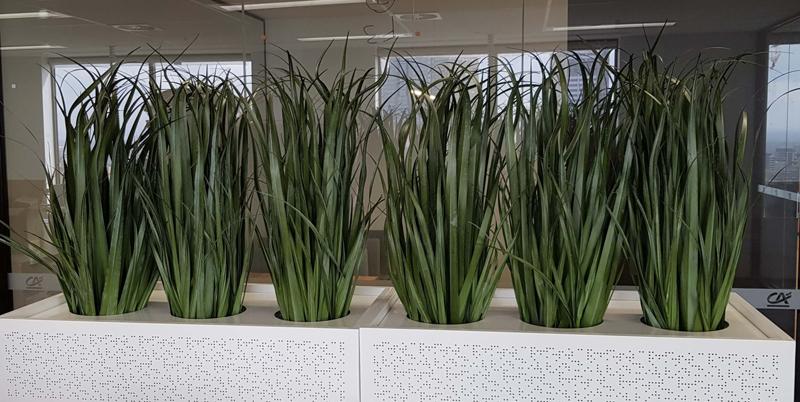 зонирование пространства в комнате растениями