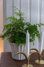 Выбираем растения для темных комнат: 5 лучших видов