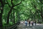 В чем хитрость центрального парка в Нью-Йорке?