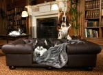 Кровать для собаки: можно купить, а можно и сделать! Необычные идеи лежанок для ваших любимцев