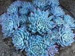 10 неприхотливых растений, которые украсят ваш дом