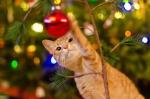 10 новогодних кошачьих наваждений