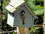 А вы построили домик для птиц? Он тоже может быть дизайнерским