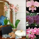 Какой цветок в интерьере 100% создает уют?