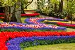 Пора в Голландию: королевский парк тюльпанов открывается