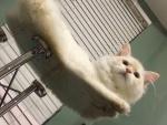 15 причин купить стеклянный стол, если в доме живет кот