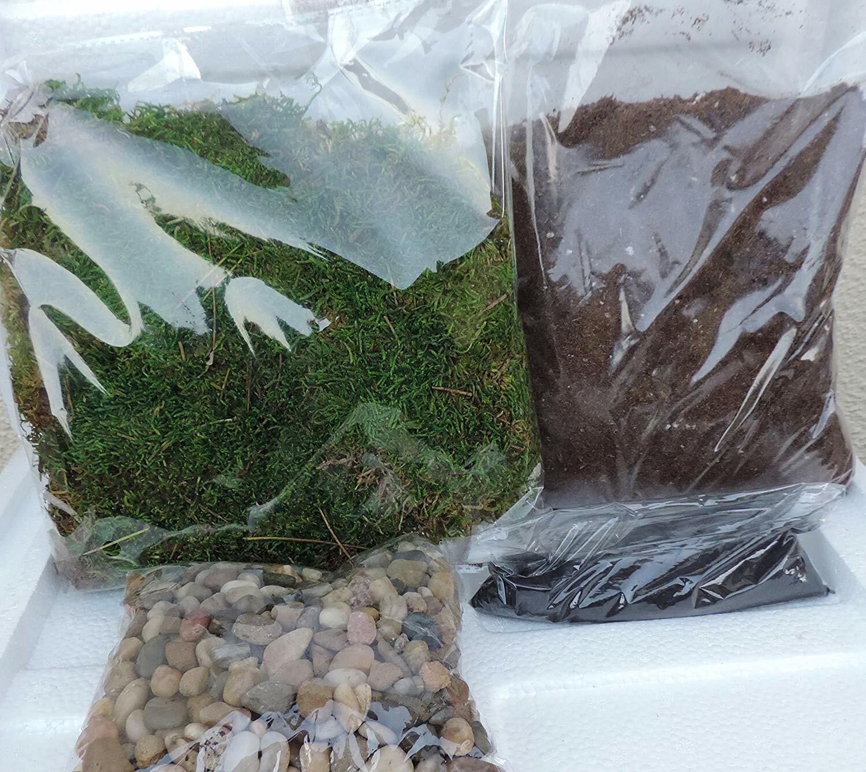 материалы для изготовления мохового террариума