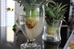 5 хитростей для красоты и здоровья домашних растений