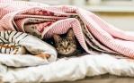 Хотите спокойного сна своему малышу — выбирайте одеяло правильно!