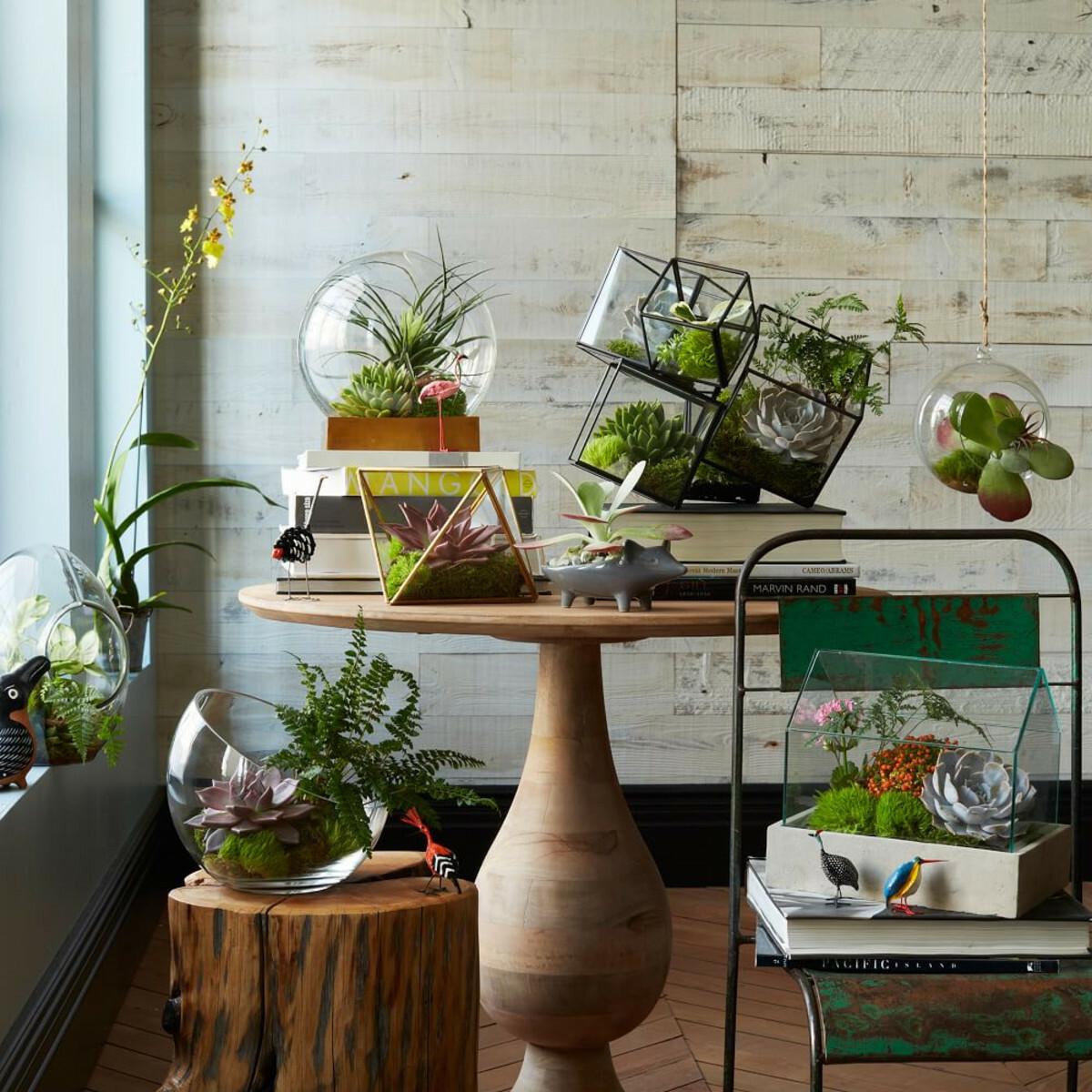 моховой террариум как способ украшения комнаты