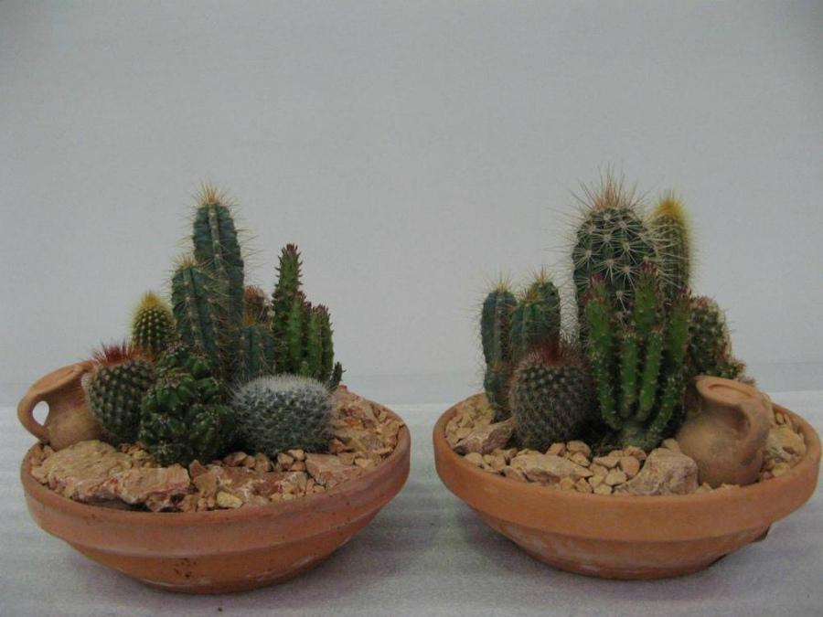 декор кактусами