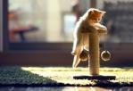Кошка в доме: как спасти стены